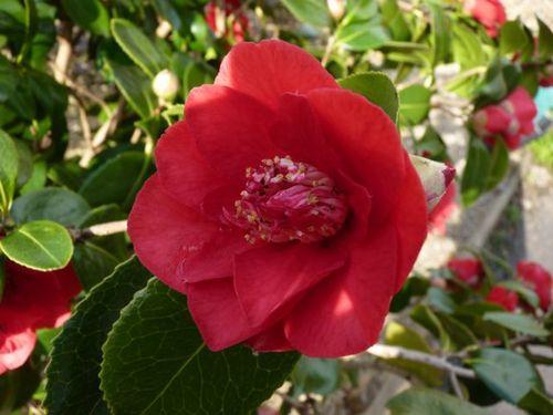 GardenMacros24