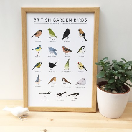 Kate Broughton birds